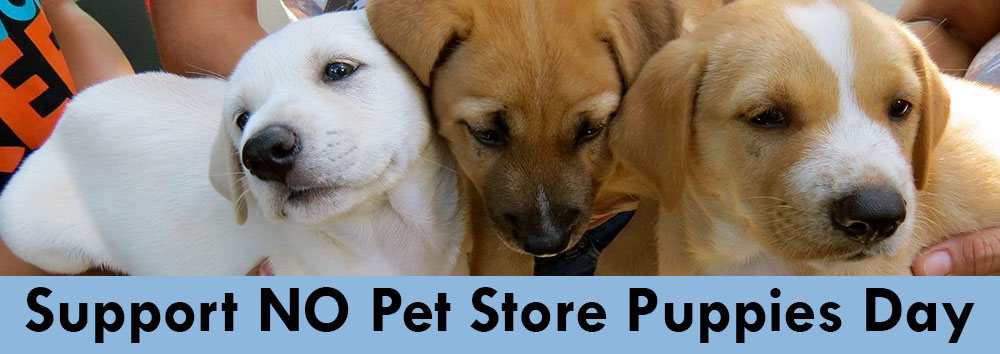 support no pet store puppies day all sato rescue